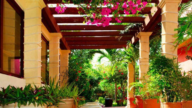 8 dicas de plantas para decorar um ambiente externo for Plantas para decorar