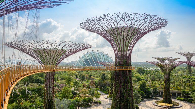 future-trees